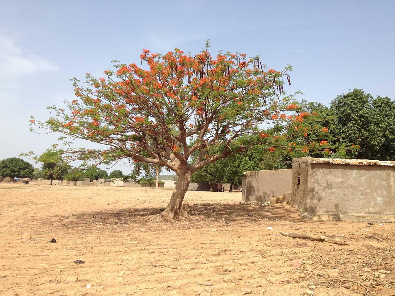 albero4